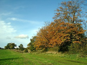 Autumn colours south of Harefield